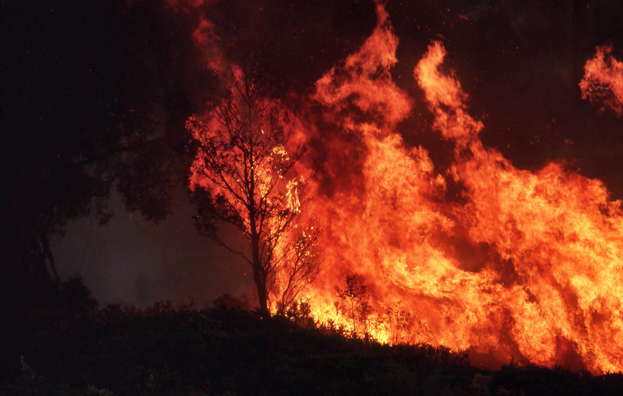 forestfire.