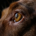 What Do Dogs See? It's Rough, But Faces Aren't First Priority