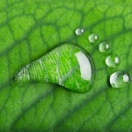 Shrinking the Carbon Footprint: 6 Companies Putting Their Foot Down