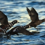 Just Ask a Seabird: Technology Boosts Animal Conservation Initiatives
