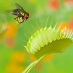 Plant Biology and Memory Intersect in the Venus Fly Trap